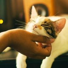 Notizie dal blog: Perché il gatto fa il pane?