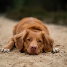 Notizie dal blog: Educare il cane con gli esercizi di obbedienza di base.