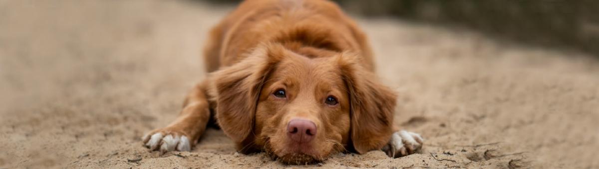 Educare il cane con gli esercizi di obbedienza di base.