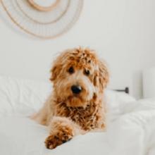 Notizie dal blog: Come superare il distacco dal nostro pet?