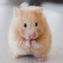 Notizie dal blog: Alimentazione del criceto