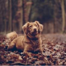 Notizie dal blog: Come le stagioni influenzano le abitudini dei nostri pet