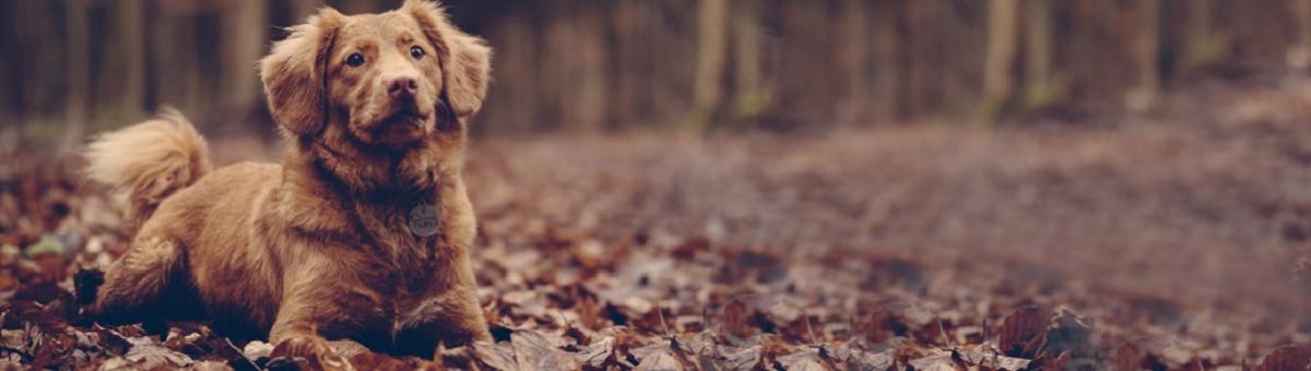 Come le stagioni influenzano le abitudini dei nostri pet
