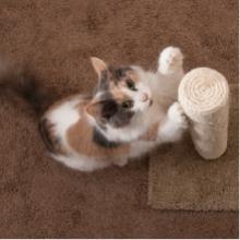 Notizie dal blog: Gatti e tiragraffi: come insegnare al nostro pet ad usarlo