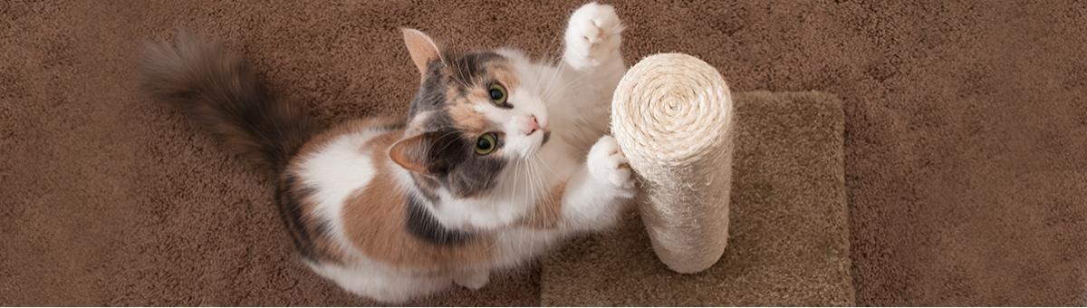 Gatti e tiragraffi: come insegnare al nostro pet ad usarlo