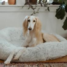 Notizie dal blog: La cuccia perfetta per il tuo pet