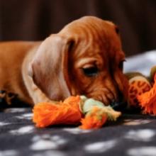 Notizie dal blog: Come tenere il pet impegnato quando è a casa da solo