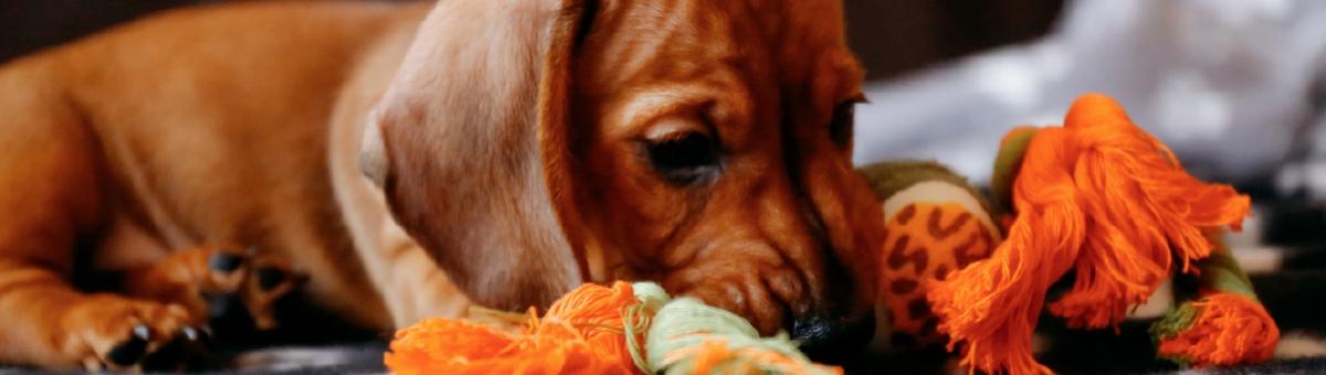 Come tenere il pet impegnato quando è a casa da solo
