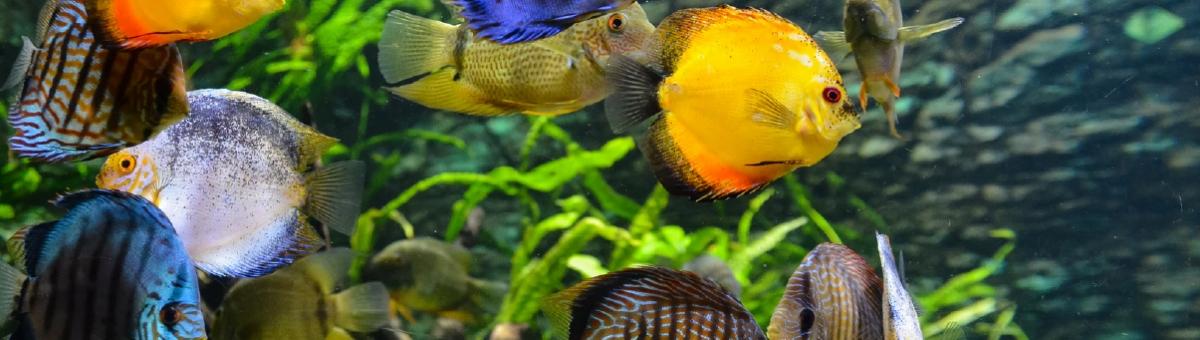 Le piante migliori per l'acquario