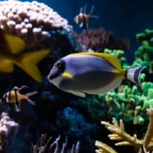 Notizie dal blog: Come progettare e mantenere un acquario perfetto