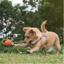 Notizie dal blog: Come mantenere il proprio pet in forma smagliante
