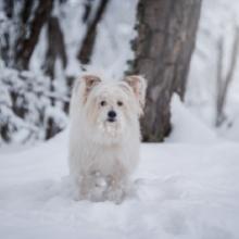 Notizie dal blog: Come proteggere gli animali dal freddo