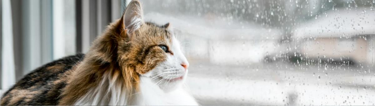 Come capisco se il mio gatto ha freddo?
