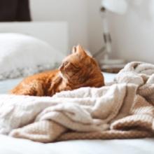Notizie dal blog: Quali sono gli animali che amano l'inverno?