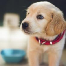 Notizie dal blog: Gli accessori indispensabili per accogliere un cucciolo in casa