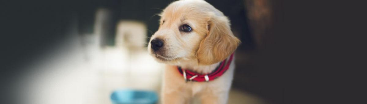 Gli accessori indispensabili per accogliere un cucciolo in casa
