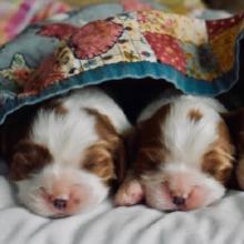 Notizie dal blog: Come svezzare un cucciolo di cane