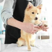 Notizie dal blog: La prima toelettatura del cucciolo