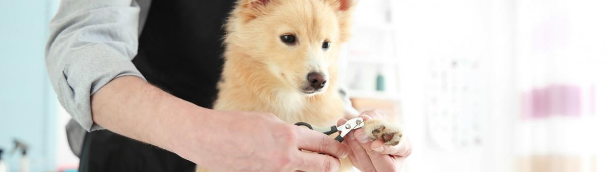 La prima toelettatura del cucciolo