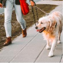 Notizie dal blog: Come pulire il cane quando rientra dalla passeggiata