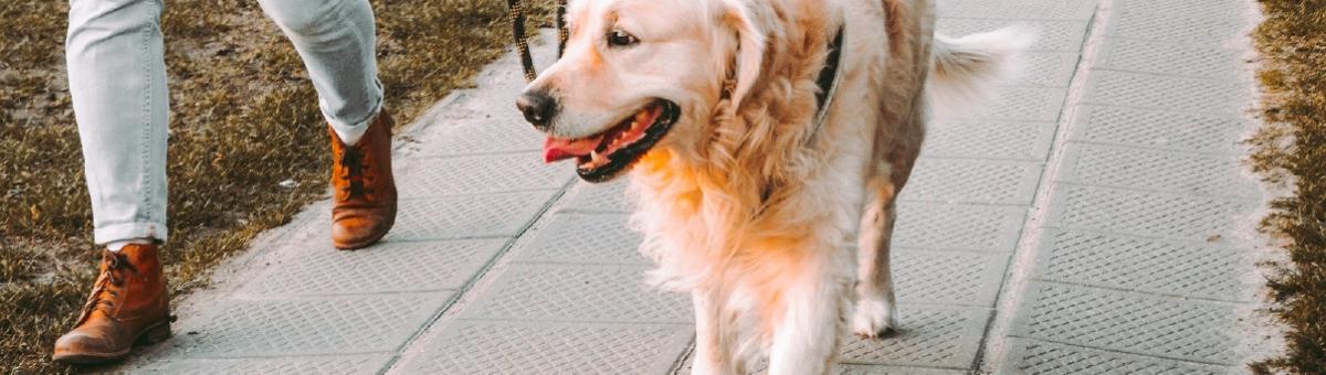 Come pulire il cane quando rientra dalla passeggiata