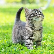 Notizie dal blog: Come tenere sotto controllo la salute del gatto