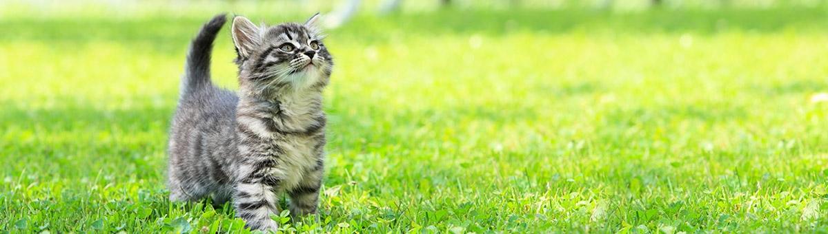 Come tenere sotto controllo la salute del gatto