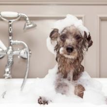 Notizie dal blog: Come fare il bagnetto al cane in casa