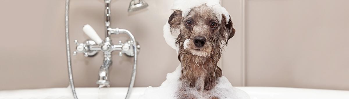 Come fare il bagnetto al cane in casa