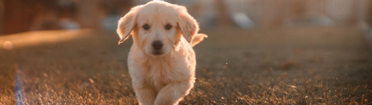 Come prevenire le malattie dei cani
