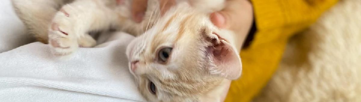 Accessori indispensabili per tenere il pet in salute