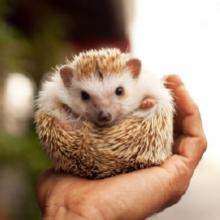 Notizie dal blog: Quali sono gli animali che si svegliano dal letargo in primavera?