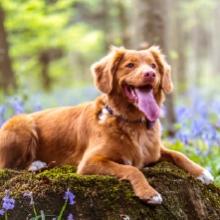 Notizie dal blog: Animali domestici e primavera: tutti i consigli utili