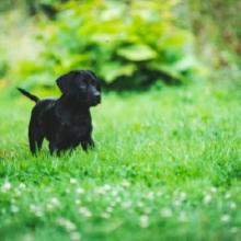 Notizie dal blog: I cani e il giardino: come educare i pet a stare all'aria aperta