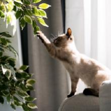 Notizie dal blog: Piante e animali: a quali fare attenzione per la salute del pet