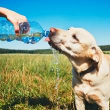 Notizie dal blog: Come mantenere idratati i pet