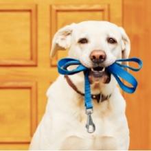 Notizie dal blog: Come scegliere il guinzaglio perfetto per il mio pet