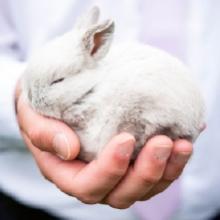 Notizie dal blog: Coniglietto domestico: perché adottarne uno?