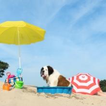 Notizie dal blog: Animali in spiaggia: cosa portare sotto l' ombrellone