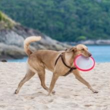 Notizie dal blog: Giochi da fare in spiaggia con il cane: ecco i più divertenti