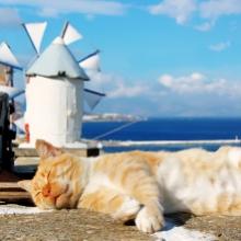 Notizie dal blog: Perchè i gatti amano addormentarsi al sole?