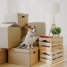 Notizie dal blog: Il trasloco con i pet: come organizzarsi al meglio