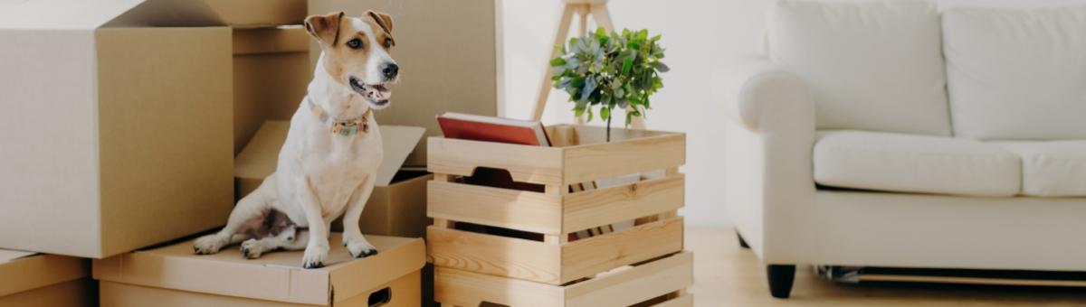 Il trasloco con i pet: come organizzarsi al meglio