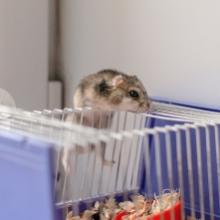 Notizie dal blog: Come scegliere la gabbia perfetta per il criceto