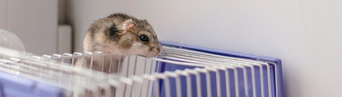 Come scegliere la gabbia perfetta per il criceto