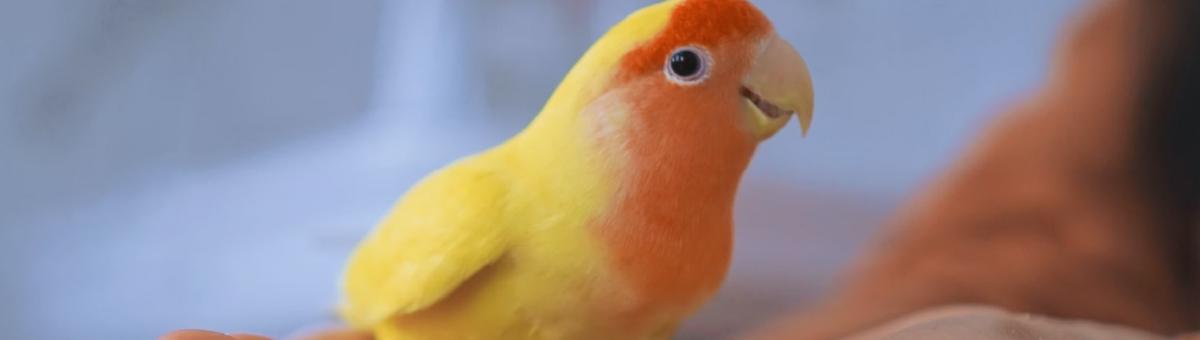 Alimentazione dei pappagalli: cosa dare da mangiare ai nostri amici piumati
