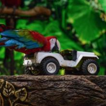 Notizie dal blog: Giochi per pappagalli: quali scegliere per il tuo pet