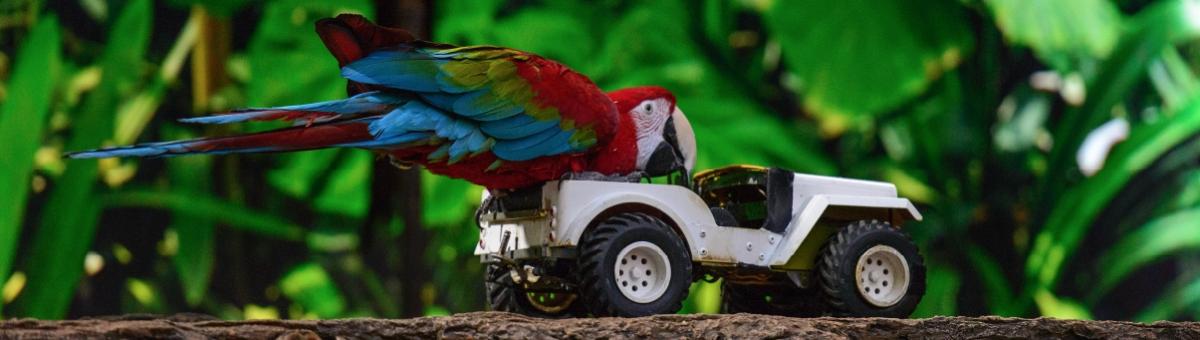 Giochi per pappagalli: quali scegliere per il tuo pet