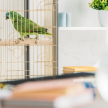 Notizie dal blog: Come pulire la gabbia degli uccelli e quali errori non fare