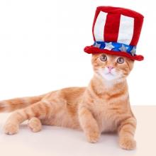 Notizie dal blog: La Giornata Mondiale del Gatto